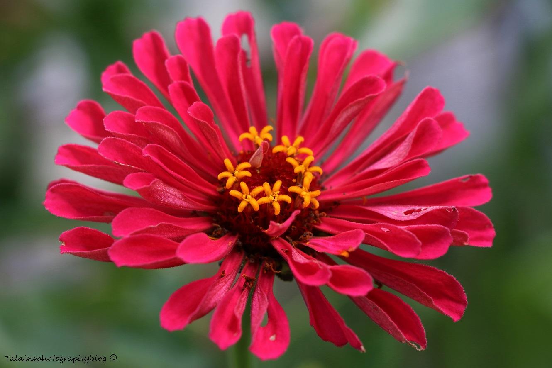 Flower 140