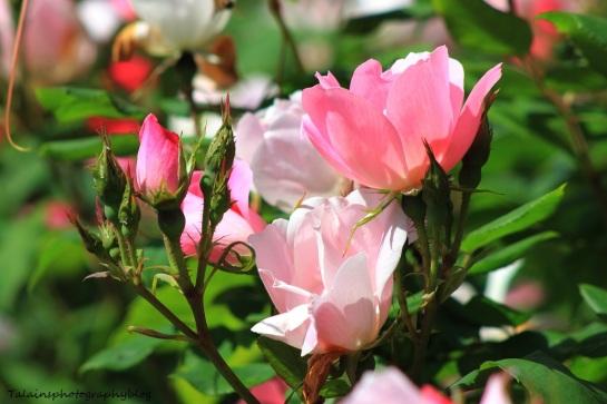 flowers143