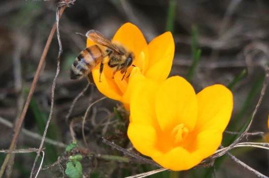 Bees & All 003