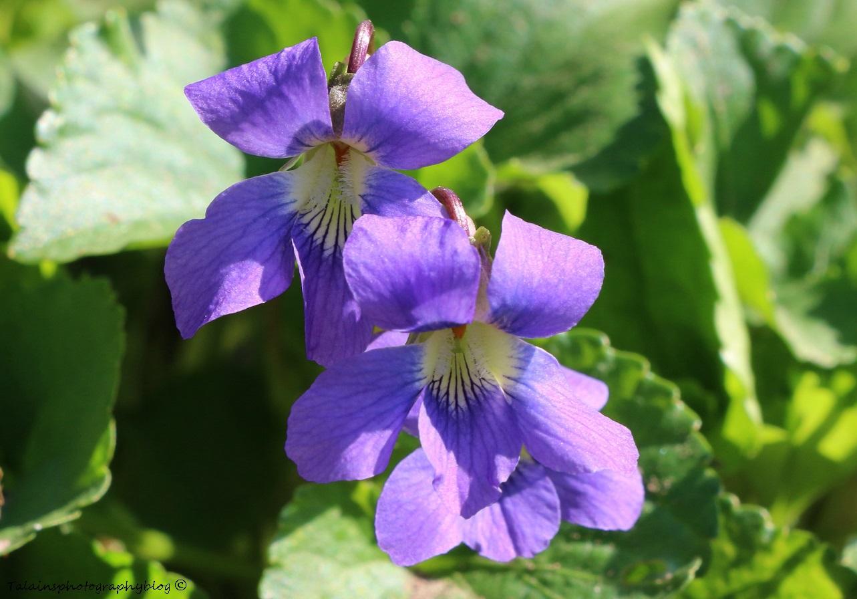 Flower 025X