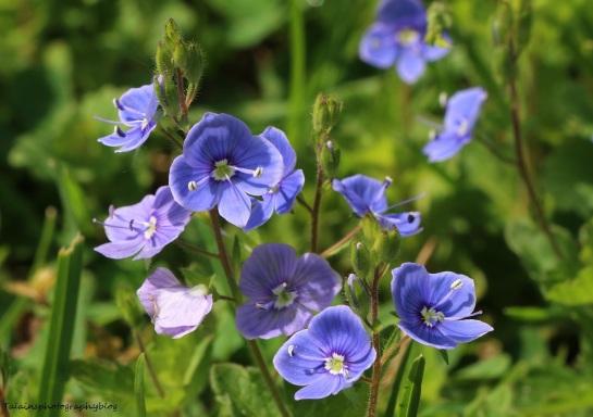 Flower 052