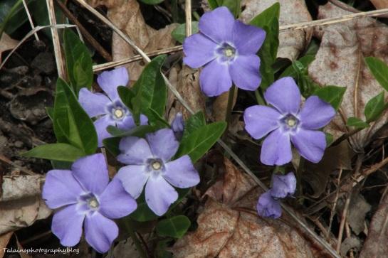Flowers 091