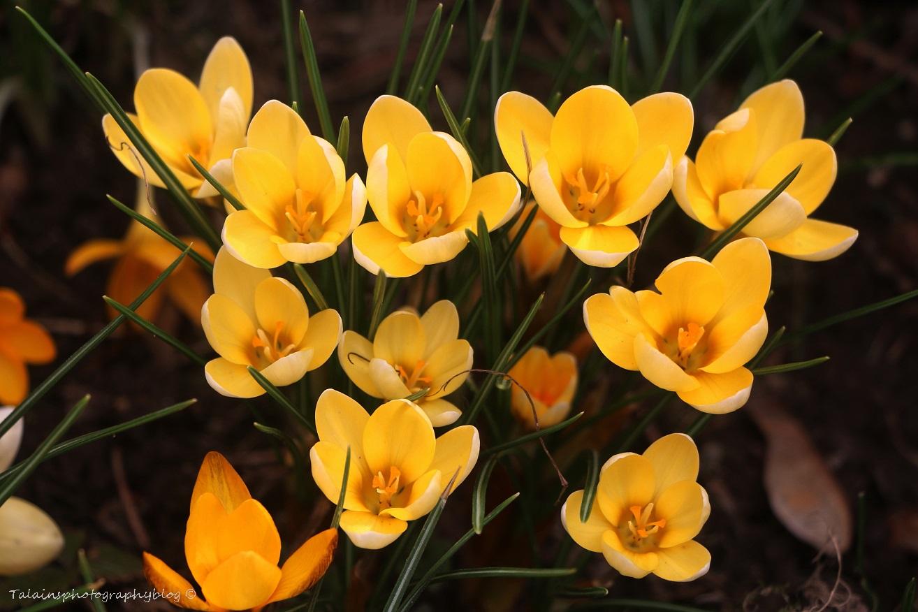 Flower 009