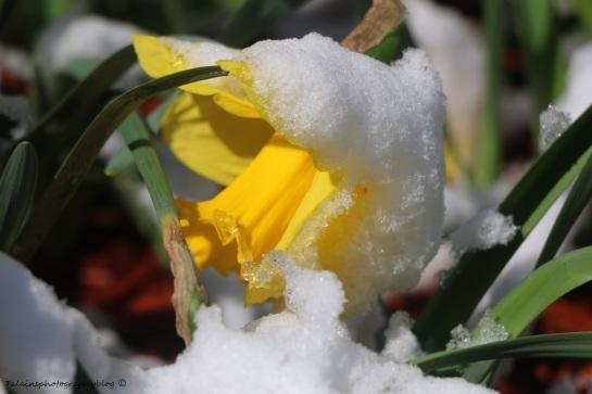 Flower 018