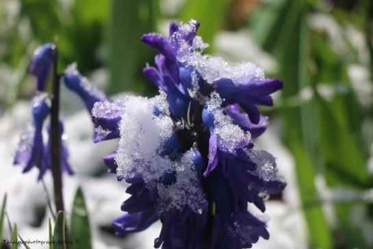 Flower 021