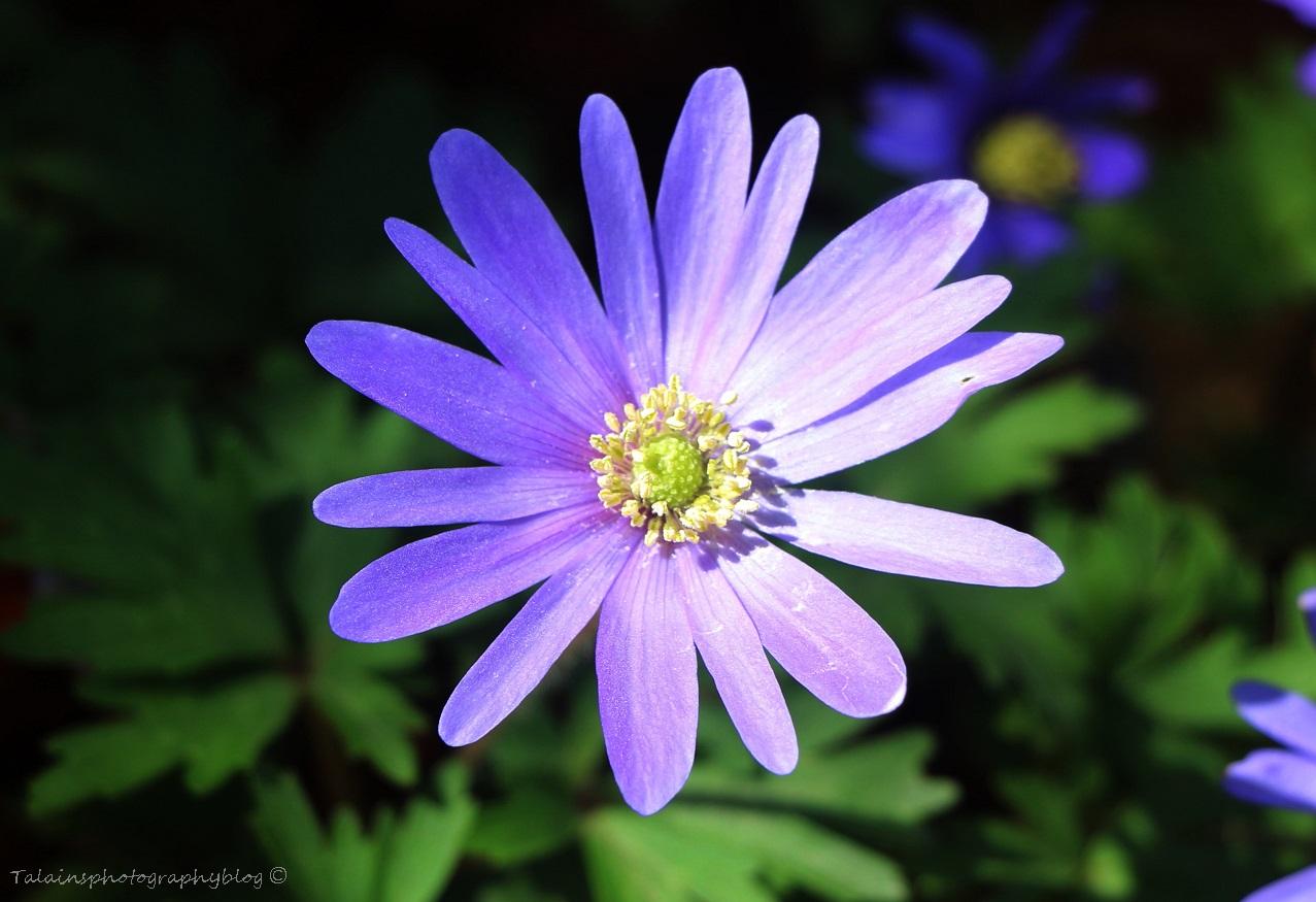Flower 024