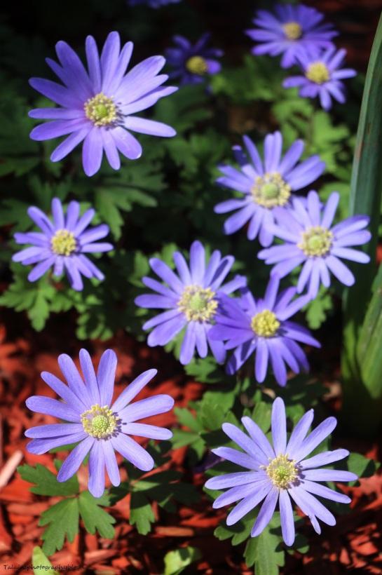 Flower 026