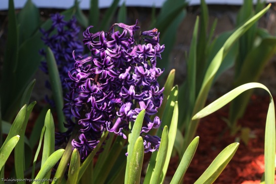 Flower 027