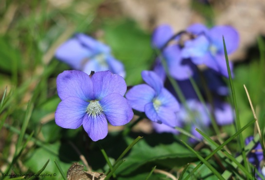 Flower 031