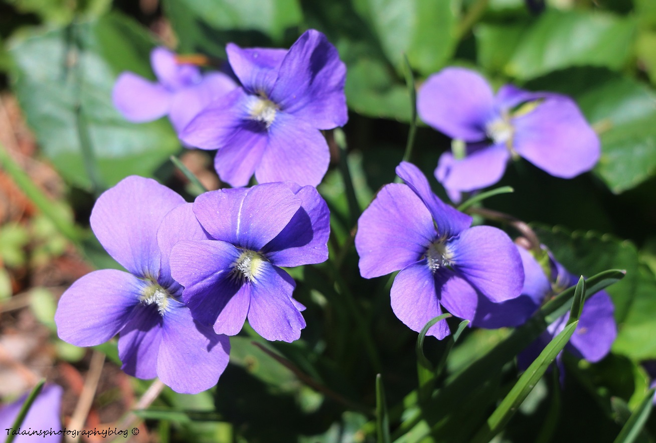 Flower 040