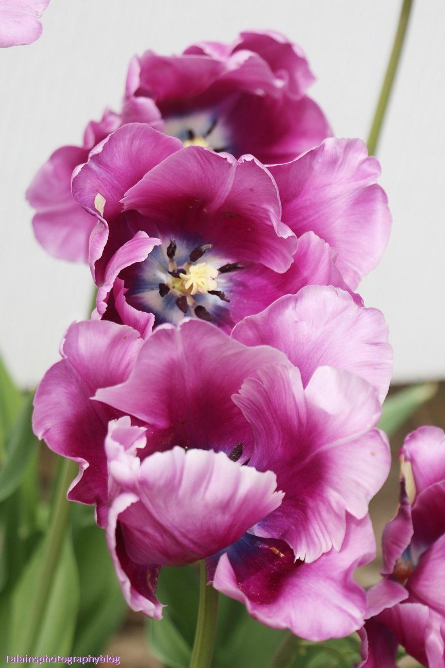 Flower 053