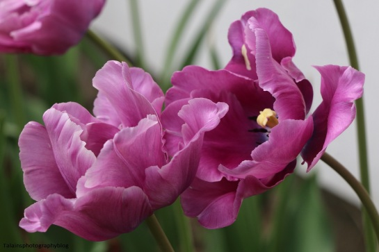 Flower 055