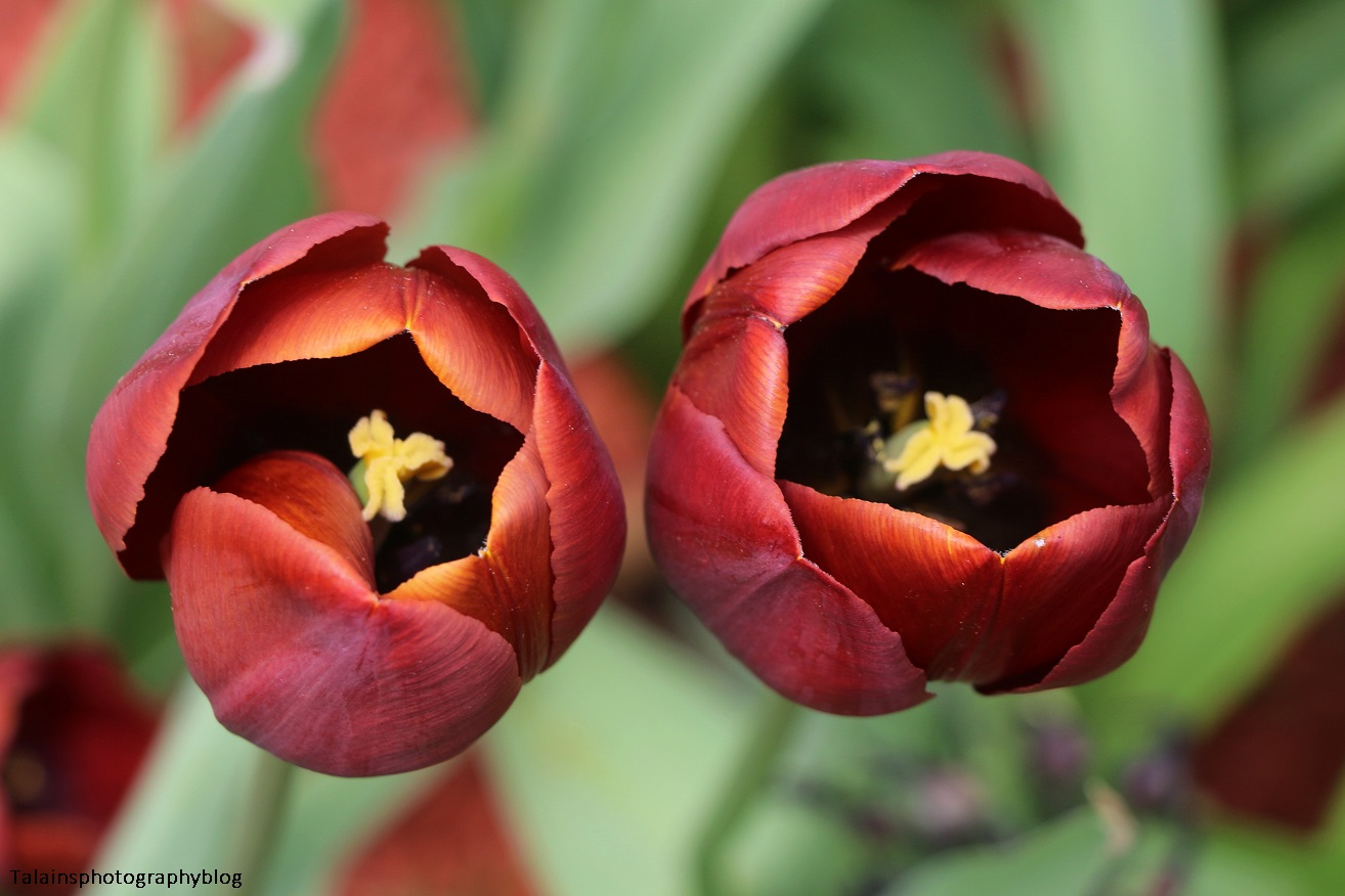 Flower 056