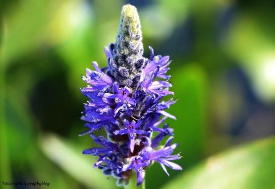 Flower 115