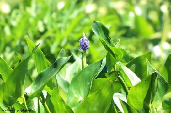 Flower 117