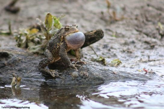 Toads 001