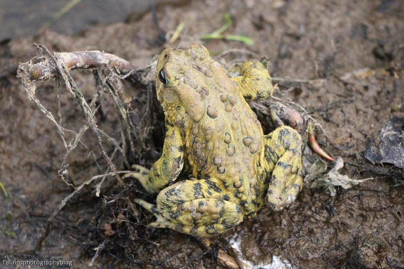 Toads 007