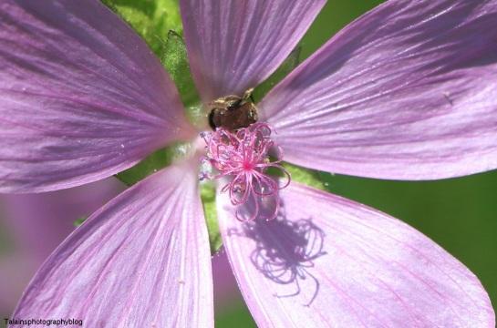 Flower 145