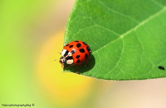 Insects 017