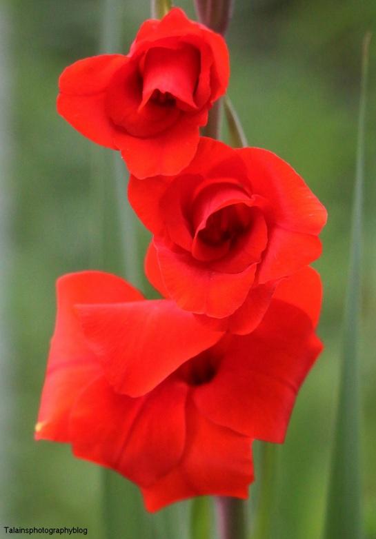 Flower 198