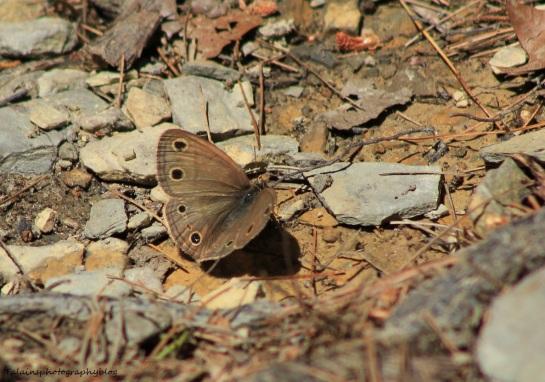 butterfly-008