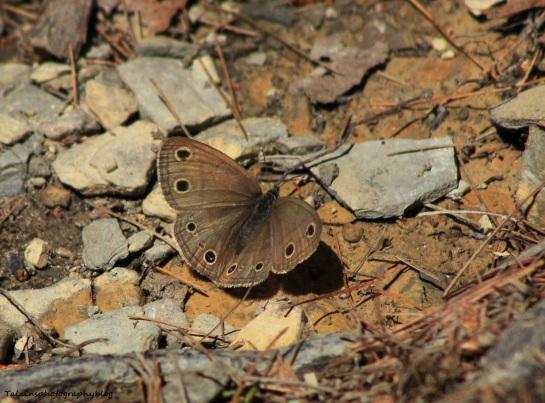 butterfly-009