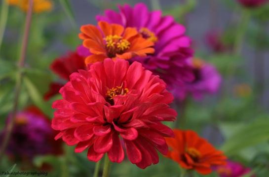 flower-241