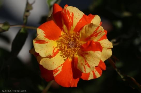 flower-260