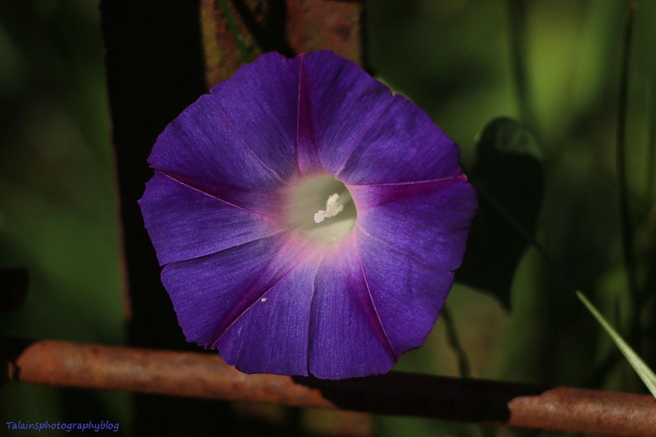 flower-266