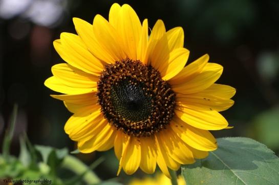 flower-271