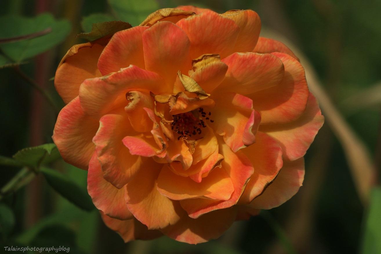 flower-276