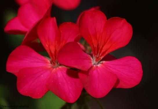 flower-278