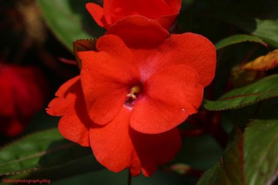 flower-279
