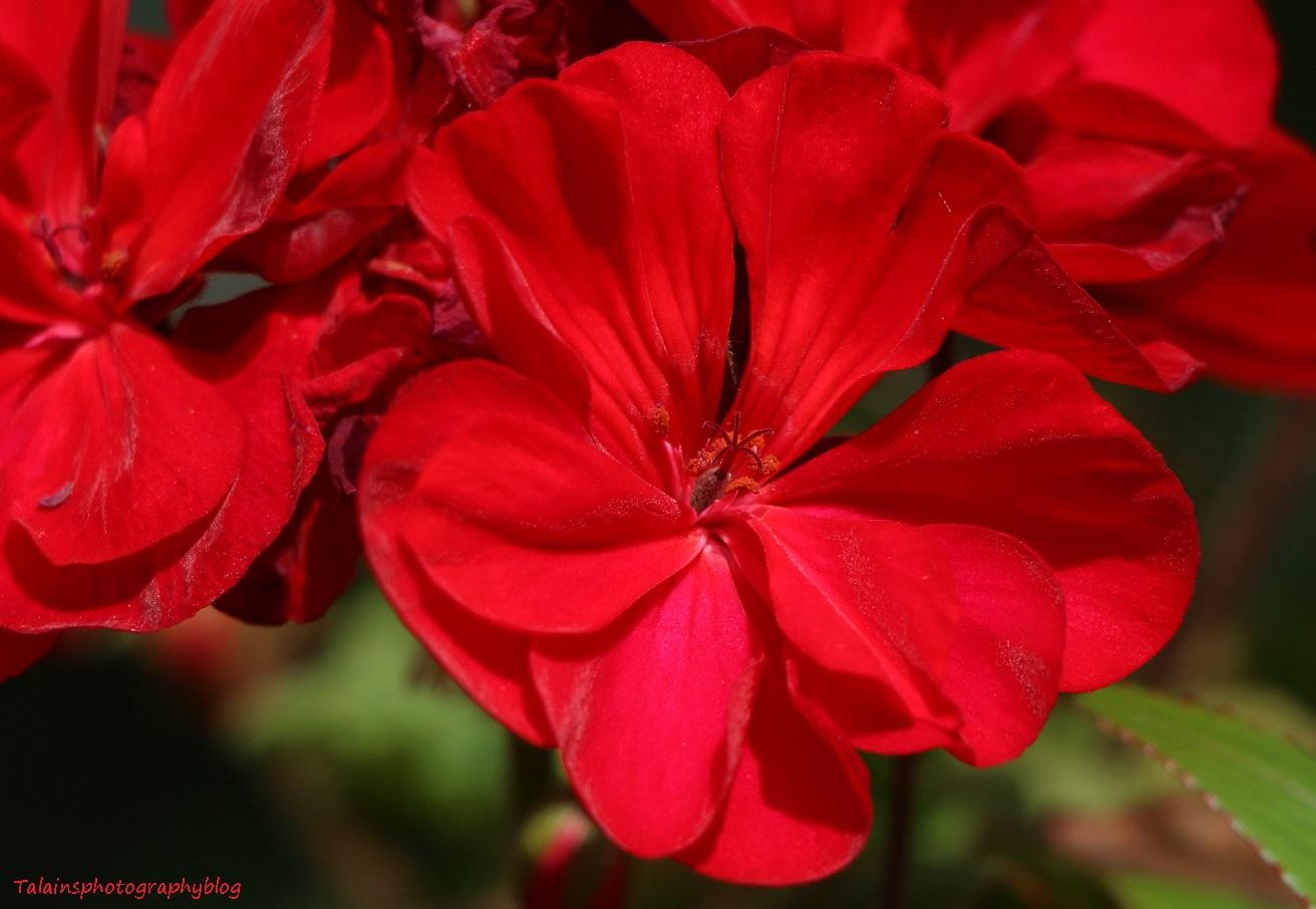 flower-280