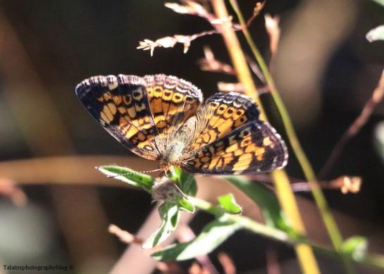 butterfly-044