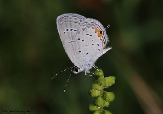 butterfly-051