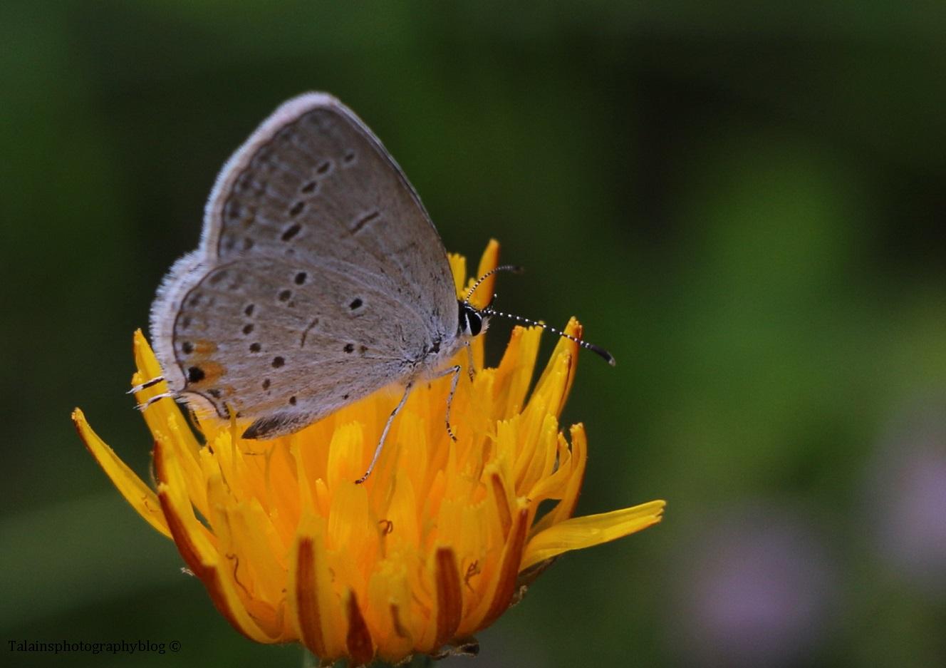 butterfly-057