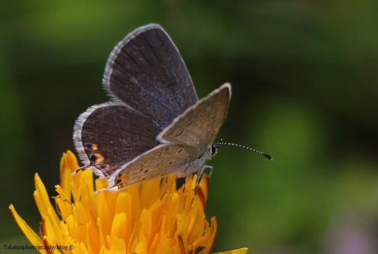 butterfly-058