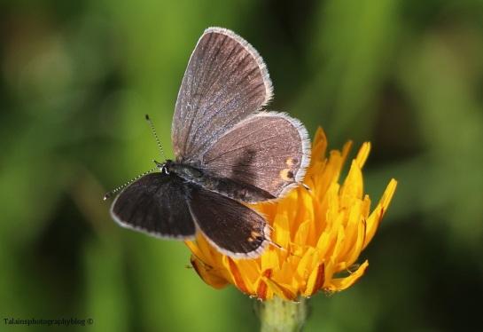 butterfly-059