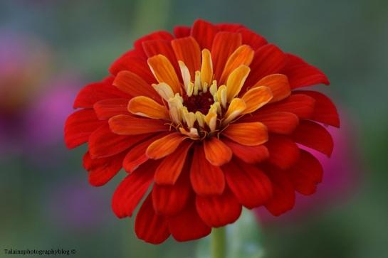 flower-246
