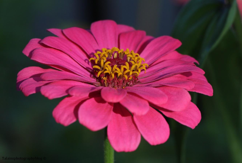 flower-250