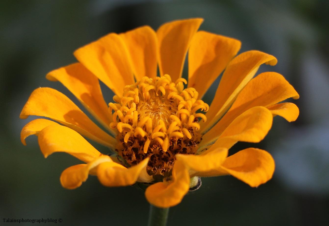 flower-251