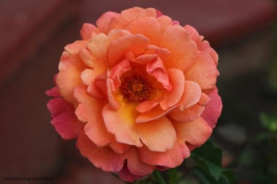 flower-308