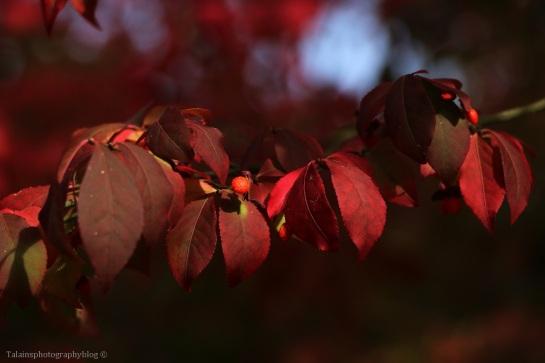 autumn-04