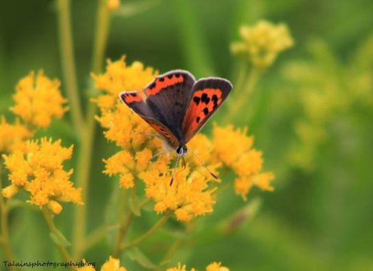 butterfly-109