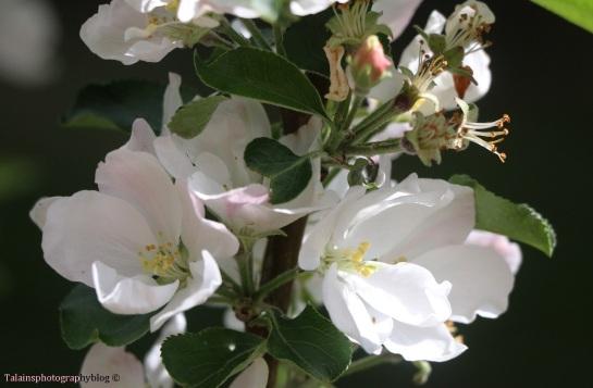 flower-074