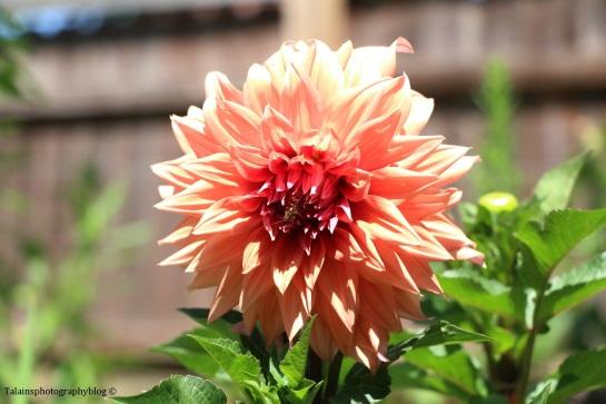 flower-168