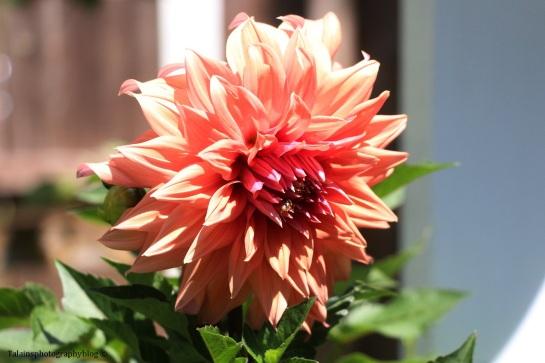 flower-169