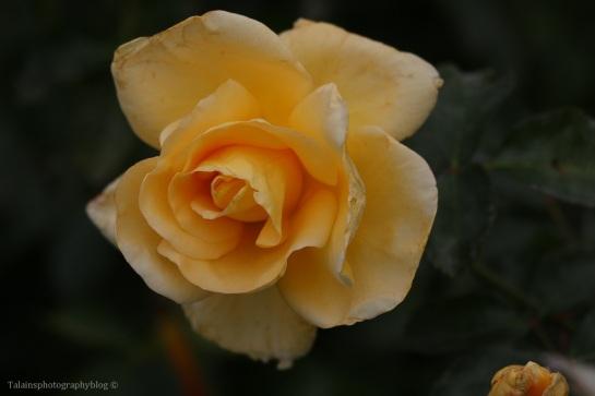 flower-287