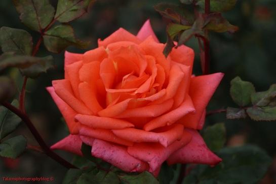 flower-298